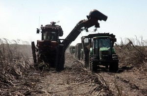 Sugarcane Harvest07
