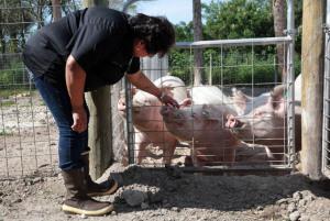 Hog Farm09