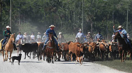BC Cattle Drive11