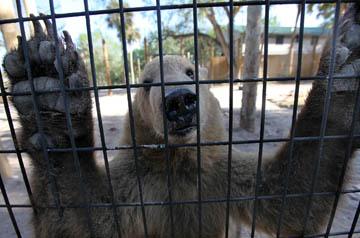 Billie Swamp Bears01
