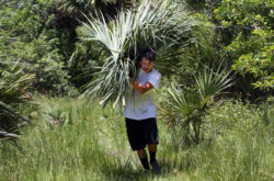 Dante Thomas carries cabbage palm fronds back to the truck July 5 during a Brighton culture department project that taught SWEP youth how to rethatch a chickee.
