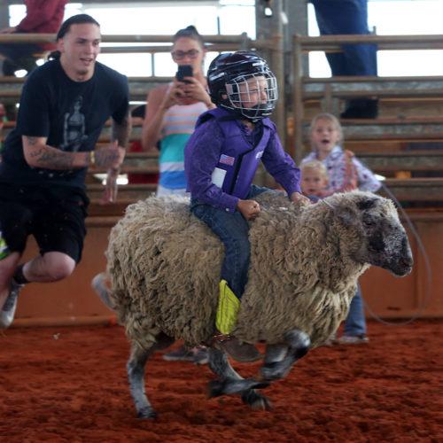 kids rodeo 5